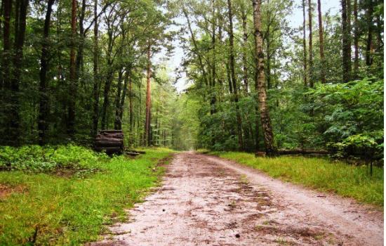Egy 43 éves férfi 700 kilométert sétált hátrafelé az erdők megmentéséért