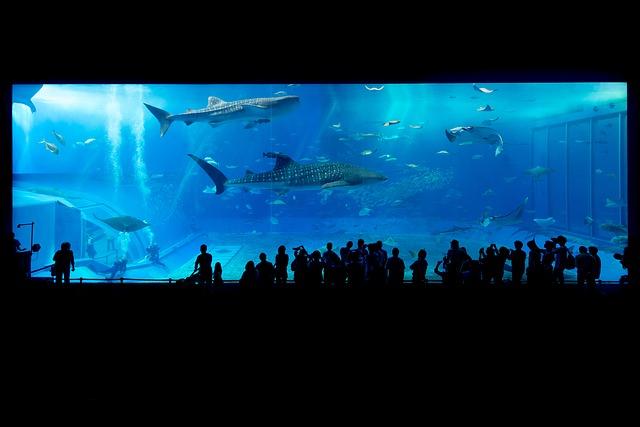 A világ legmagasabban fekvő akváriuma nyílt meg Kínában