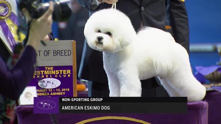 Ez a kutya nyerte a fődíjat a világ legrégebbi és legnívósabb kutyakiállításán