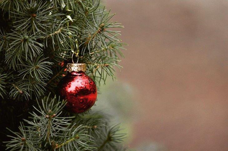 Elfogyott az összes karácsonyra szánt fenyő Ausztráliában