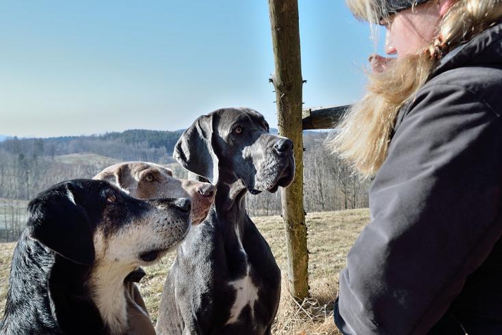 A kutyatartás negyedével csökkenti a bármely okból bekövetkező elhalálozás kockázatát