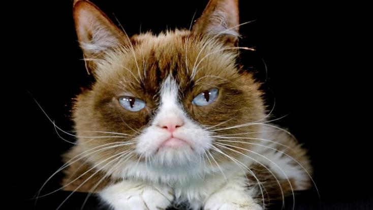 Hétéves korában elpusztult Grumpy Cat