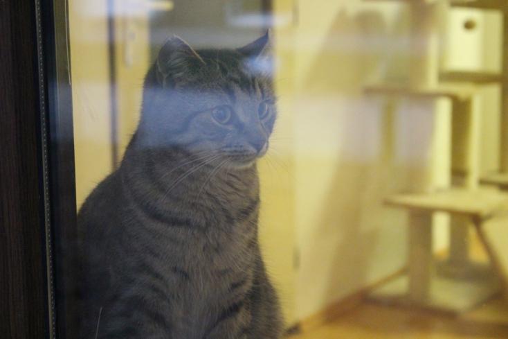 A macskák is szenvednek, ha nincs otthon a gazdi