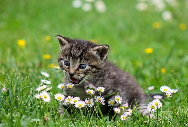 A macskák és gazdáik egészségét szolgálja, ha a házi kedvencet nem engedik kószálni a szabadban