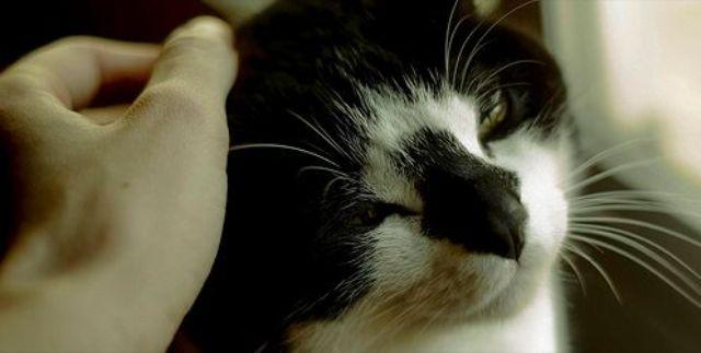 Gyógyító hatása van a macskadorombolásnak