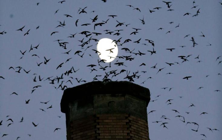 Több mint ötven villanyoszlopot alakítottak át madárbaráttá