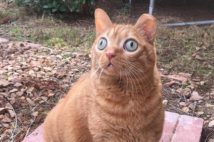 Gülüszemű macska az internet új sztárja – FOTÓK