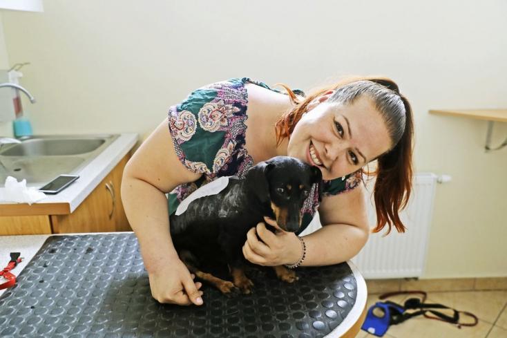 Szívszaggató Sophie, a törött gerincű tacskó története, akit Csicsó és Füss között dobtak ki